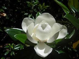 Magnolia Subdivision